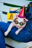 Il maiale rosso del porcellino di porcellino di Piggie si siede il corno giallo delle decorazioni del fronte della mano della ten fotografie stock libere da diritti