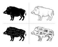 Il maiale selvaggio, cacciagione del verro ha tagliato lo schema del diagramma - insieme di elementi sulla lavagna Fotografie Stock Libere da Diritti