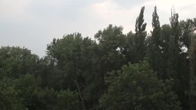 Il maltempo del vento della pioggia stock footage