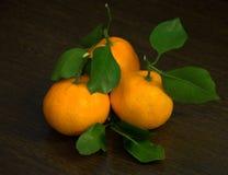 Il mandarino tre con i ramoscelli e le foglie si trovano su un fondo scuro immagine stock