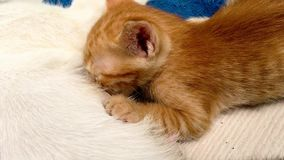 Il mangime per gatti gattini stock footage