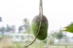 Il mango piacevole immagine stock