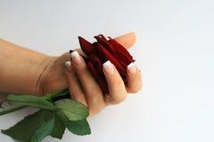 Il manicure ed è aumentato Fotografia Stock