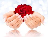 Il manicure francese con è aumentato Fotografia Stock