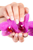 Il manicure francese della donna Immagini Stock Libere da Diritti