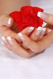 Il manicure francese ed il color scarlatto sono aumentato Fotografia Stock
