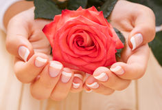 Il manicure francese ed il colore rosso sono aumentato Fotografie Stock Libere da Diritti