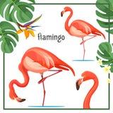 Il manifesto del fenicottero con le foglie e gli animali vector l'illustrazione illustrazione vettoriale
