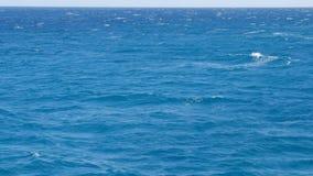 Il Mar Rosso è blu di cristallo stock footage