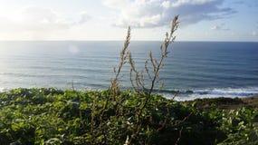 Il mare è la mia casa Fotografie Stock Libere da Diritti