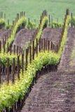 Il mare del vino ha onde verdi Fotografie Stock