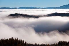 Il mare di nebbia con le foreste come priorità alta Fotografia Stock