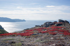 Il mare di Ochotsk, costa del nord, tundra fotografia stock libera da diritti