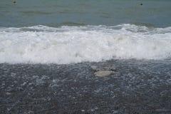 Il mare e la spiaggia in Soci fotografie stock