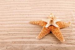 Il mare le stelle delle dimensioni differenti si trova su a vicenda Fotografia Stock