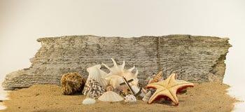Il mare obietta la composizione Immagini Stock