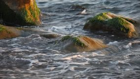 Il mare ondeggia sulla spiaggia dell'assicella Immagini Stock