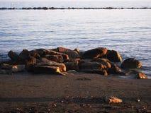Il mare oscilla sulla spiaggia, il tramonto, mare senza fine fotografia stock libera da diritti