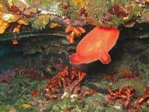 Il mare squirt Fotografia Stock