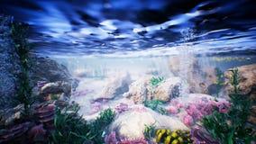 Il mare subacqueo ondeggia l'ondulazione ed il pesce tropicale Loopable video d archivio