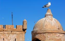 Il Marocco, Essaouira: gabbiano sulla fortezza Immagini Stock Libere da Diritti