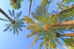 Il Marocco, Marrakesh: palme Fotografia Stock Libera da Diritti