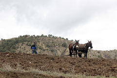 Il Marocco pastorale Fotografia Stock