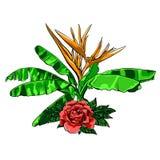 Il mazzo dei fiori tropicali con è aumentato su bianco Fotografia Stock Libera da Diritti
