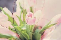 Il mazzo dei tulipani rosa addolcisce i toni fotografia stock libera da diritti