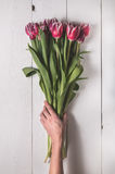 Il mazzo dei tulipani sui bordi bianchi per la festa Fotografie Stock