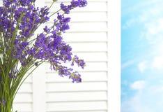 Il mazzo della lavanda contro la finestra bianca Shutters osservare fuori un giorno fresco con il cielo e le nuvole un giorno graz Fotografia Stock