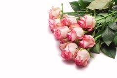 Il mazzo della rosa di rosa fiorisce su fondo bianco Fotografie Stock