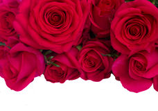Il mazzo delle rose rosa scure si chiude su Fotografia Stock