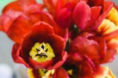 Il mazzo di bella molla fiorisce nell'interno, fine su, per le donne al giorno del ` s del biglietto di S. Valentino Fotografia Stock Libera da Diritti