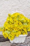 Il mazzo di belle primaverine selvatiche fiorisce in un canestro bianco Immagine Stock