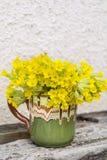 Il mazzo di belle primaverine selvatiche fiorisce in una tazza d'annata dell'argilla Fotografie Stock