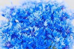 Il mazzo di fiordaliso fiorisce con bokeh, floreale Immagini Stock