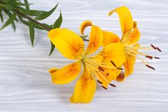 Il mazzo di giallo luminoso fiorisce le rose su un di legno Immagine Stock Libera da Diritti