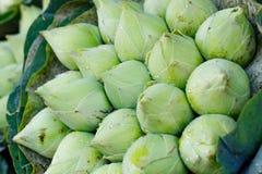 Il mazzo di loto verde fresco germoglia con il fondo delle gocce di pioggia al mercato del fiore, Tailandia immagine stock libera da diritti