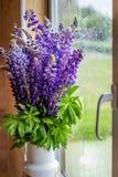 Il mazzo di lupino fiorisce in un vaso dalla finestra Immagine Stock