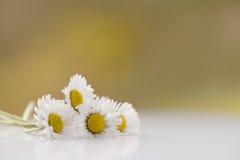 Il mazzo di margherita fresca fiorisce su una superficie bianca Immagine Stock Libera da Diritti