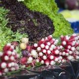 Il mazzo di ravanello e di insalata sul mercato dell'alimento della via in Francia del sud, Provenza, agricoltori commercializza  Fotografia Stock