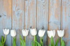Il mazzo di tulipani bianchi in una fila su un grey blu ha annodato il vecchio fondo di legno con la disposizione vuota dello spa fotografia stock