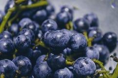Il mazzo di uva Fotografia Stock