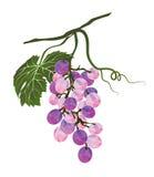 Il mazzo di uva ha stilizzato poligonale Fotografie Stock