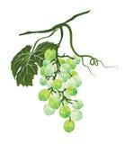 Il mazzo di uva ha stilizzato poligonale Immagini Stock Libere da Diritti