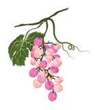 Il mazzo di uva ha stilizzato poligonale Fotografia Stock