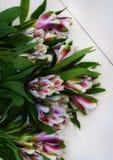 il mazzo fiorisce il fondo bianco di legno di alstroemeria Fotografie Stock Libere da Diritti