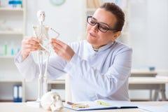 Il medico della donna che studia scheletro umano Fotografia Stock Libera da Diritti