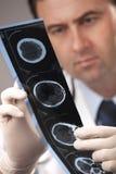 Il medico sta controllando i raggi X Immagini Stock Libere da Diritti